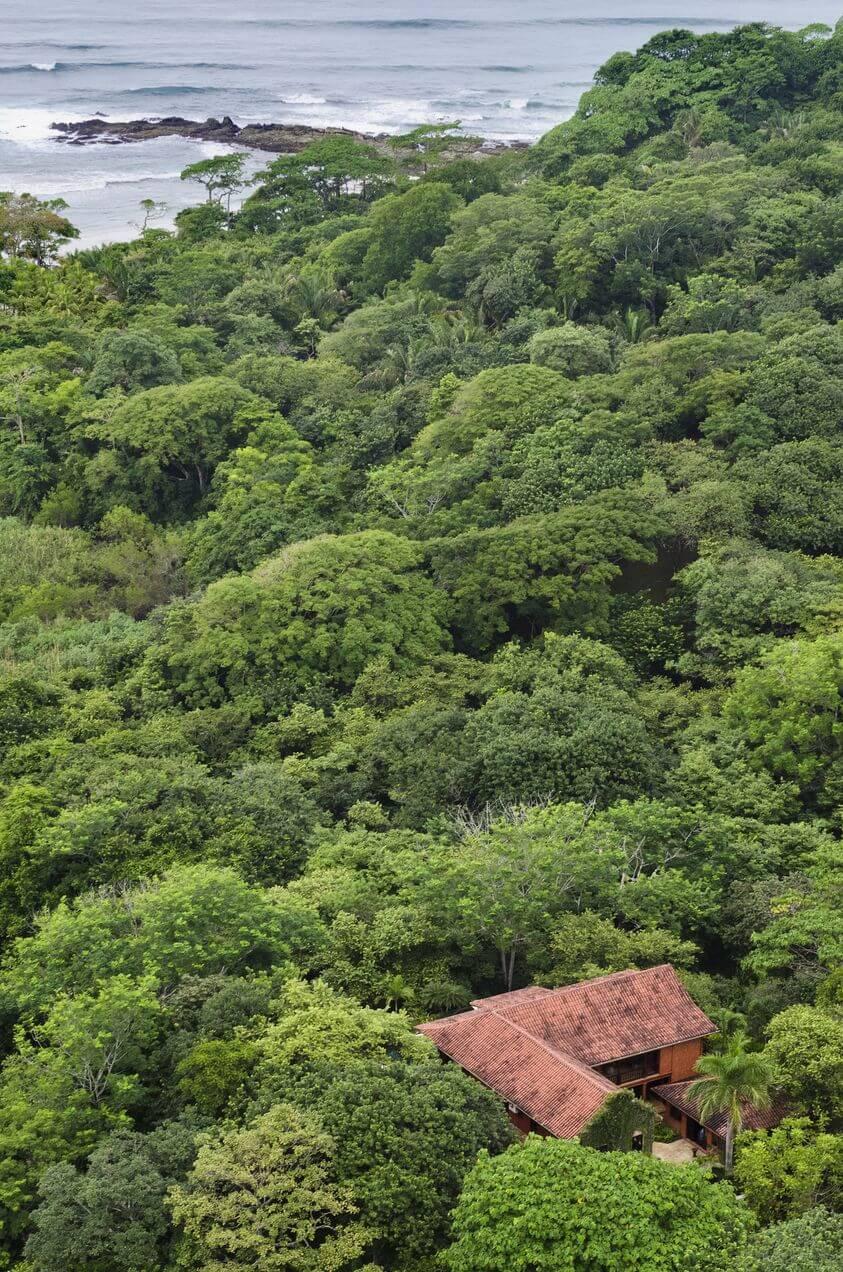 Barrigona in Costa Rican Jungle