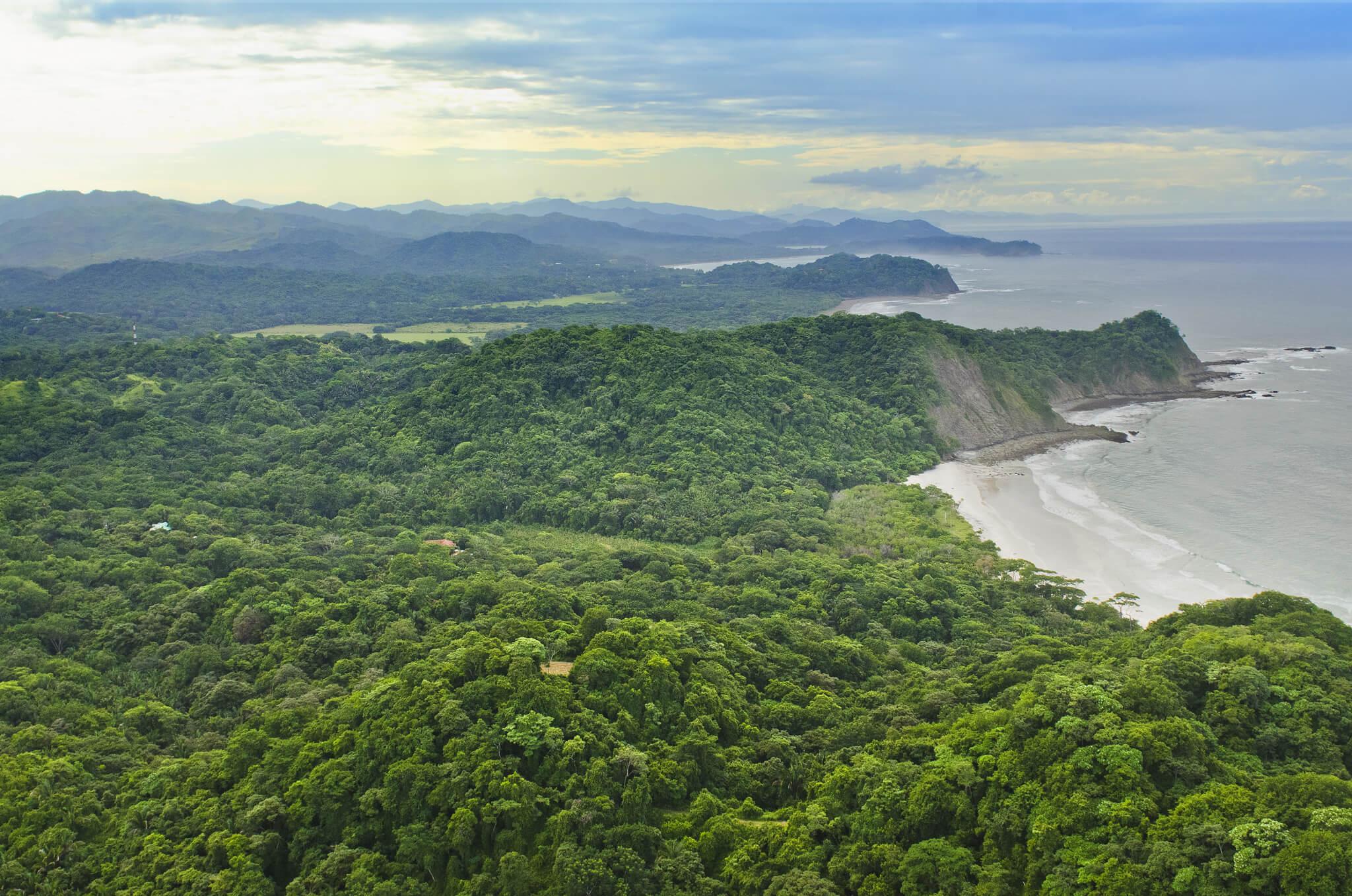 Barrigona Costa Rica Jungle