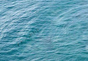 Deep Ocean Blue Barrigona Samara Costa Rica