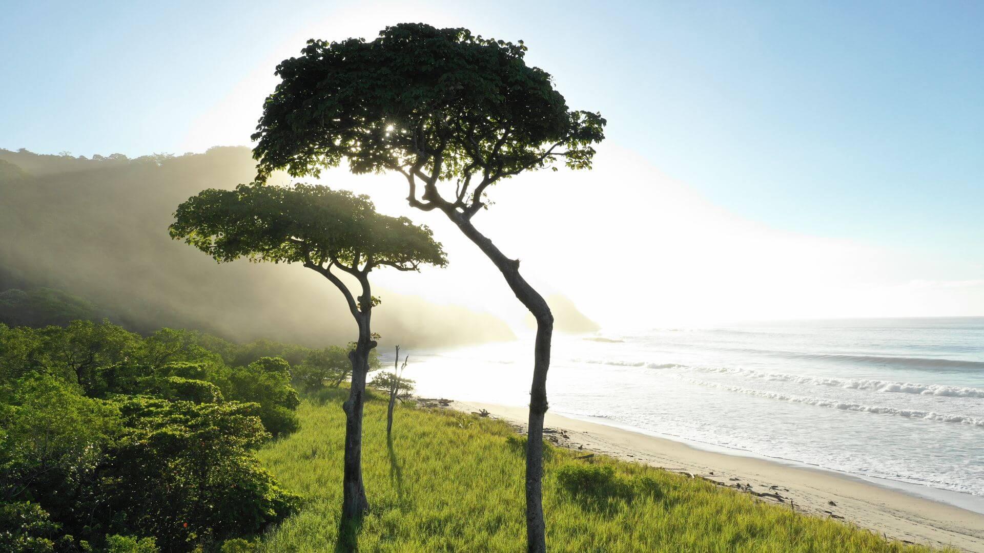 Playa Barrigona Samara Nature