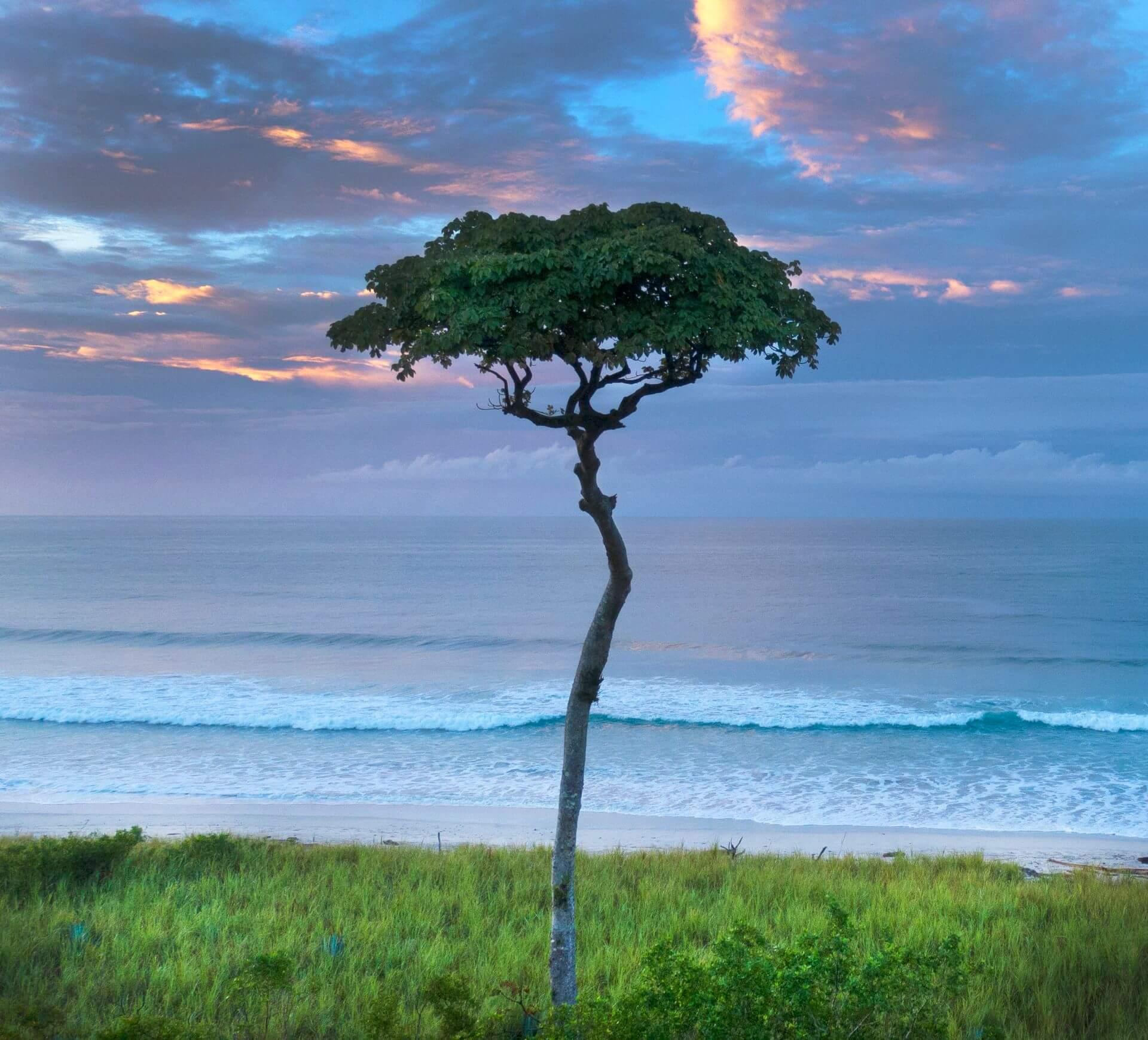 Playa Barrigona Nature